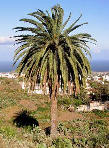 Palme Palmöl
